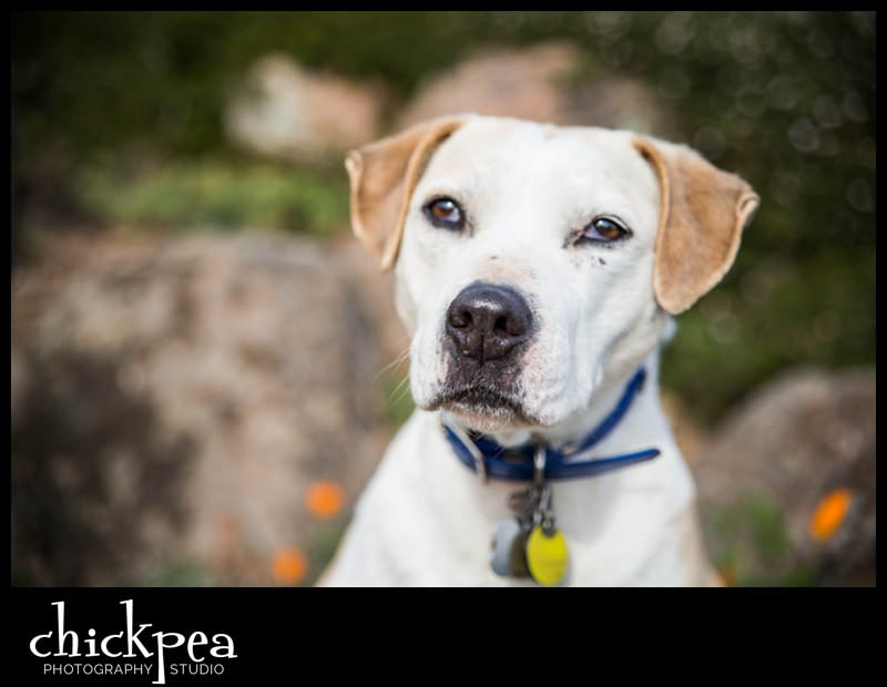 Oakland Hills Pet Portraits 1