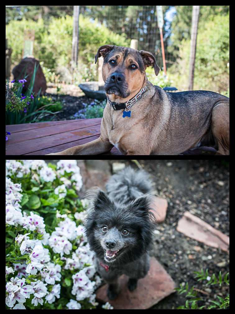 Pet Portraits in the Hills of Pinole 1