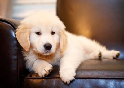 puppy_home gallery