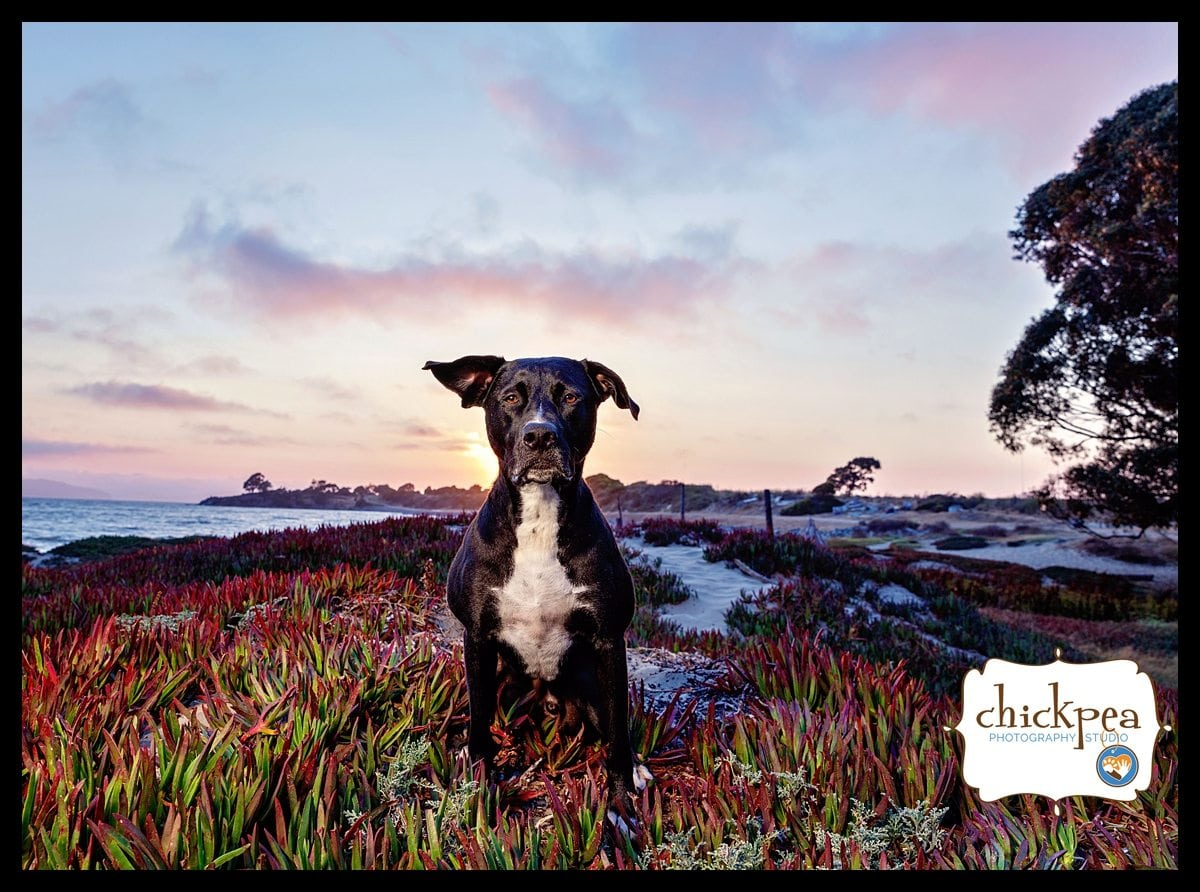 Luke 1 WEB - East Bay Pet Photography - Sunset at Albany Beach