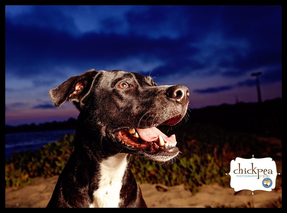 Luke 21 WEB - East Bay Pet Photography - Sunset at Albany Beach