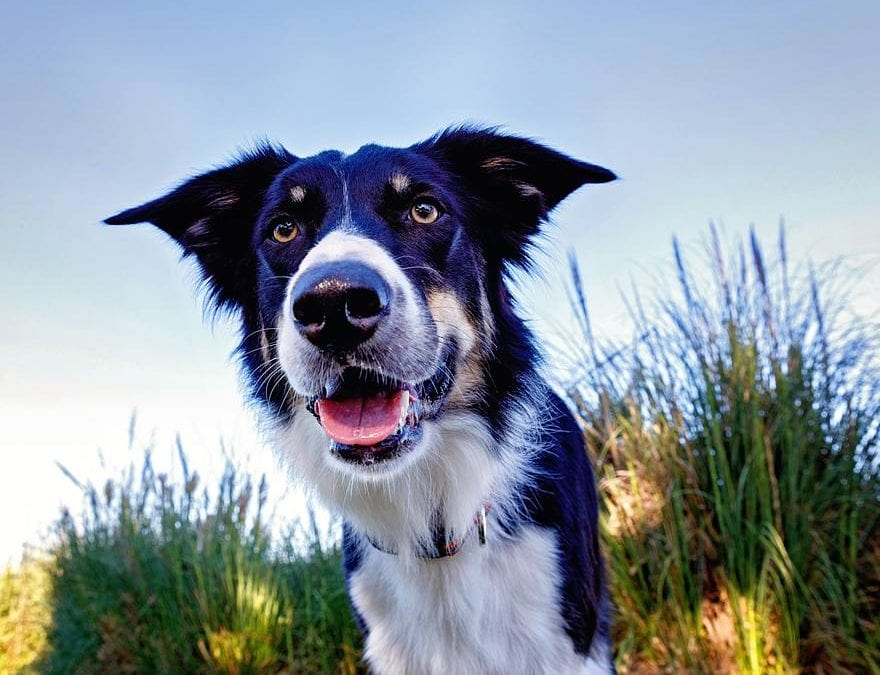 What to Bring to Your Dog Photo Session